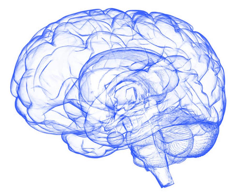 Human brain sketch in blue